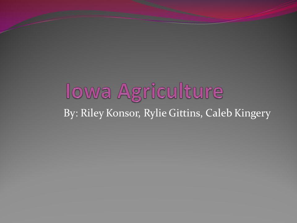 By: Riley Konsor, Rylie Gittins, Caleb Kingery