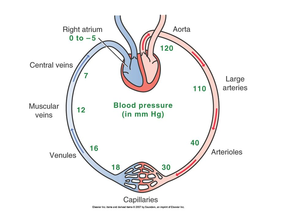 Hypertension Pathogenesis Heart –Ventricular hypertrophy Vicious cycle –Results in smaller chambers  less Cardiac output –Less output  has to work harder –Works harder  hypertrophies more More at risk for ischemia More vulnerable to coronary artery disease