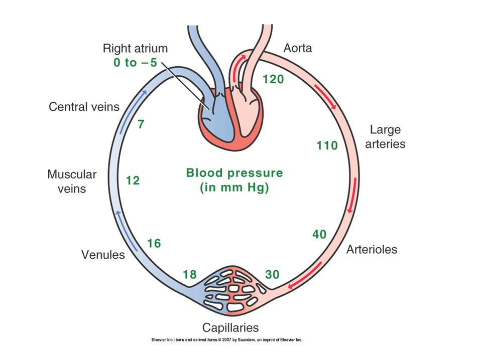 Regulation of Cardiac Output CO ~ 5liters/min CO = HR X SV Average HR 70 bpm, average SV 70ml –CO = 70 X 70 = 4900 ml/min = 4.9 liters/min