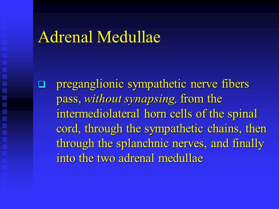 Adrenal Medullae  preganglionic sympathetic nerve fibers pass, without synapsing, from the intermediolateral horn cells of the spinal cord, through t