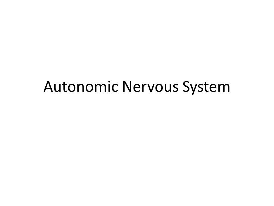 I.Comparison between somatic and autonomic nervous system A.