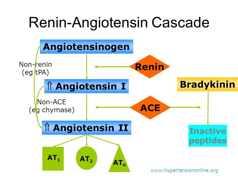 Renin-Angiotensin Cascade Angiotensinogen  Angiotensin I  Angiotensin II AT 1 AT 2 AT n Bradykinin Inactive peptides Non-renin (eg tPA) Non-ACE (eg chymase) ACE Renin www.hypertensiononline.org