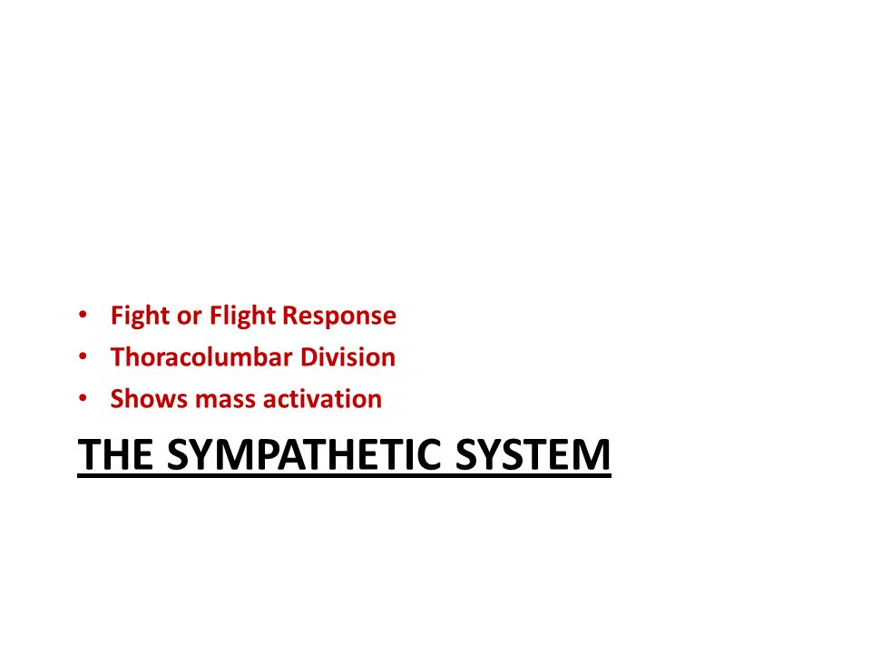 THE SYMPATHETIC SYSTEM Fight or Flight Response Thoracolumbar Division Shows mass activation