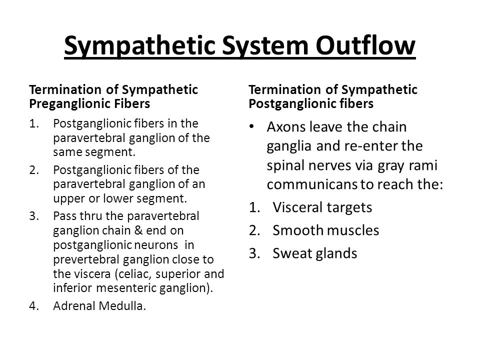 Sympathetic System Outflow Termination of Sympathetic Preganglionic Fibers 1.Postganglionic fibers in the paravertebral ganglion of the same segment.
