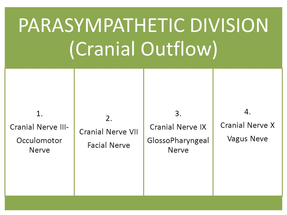 PARASYMPATHETIC DIVISION (Cranial Outflow) 1. Cranial Nerve III- Occulomotor Nerve 2.