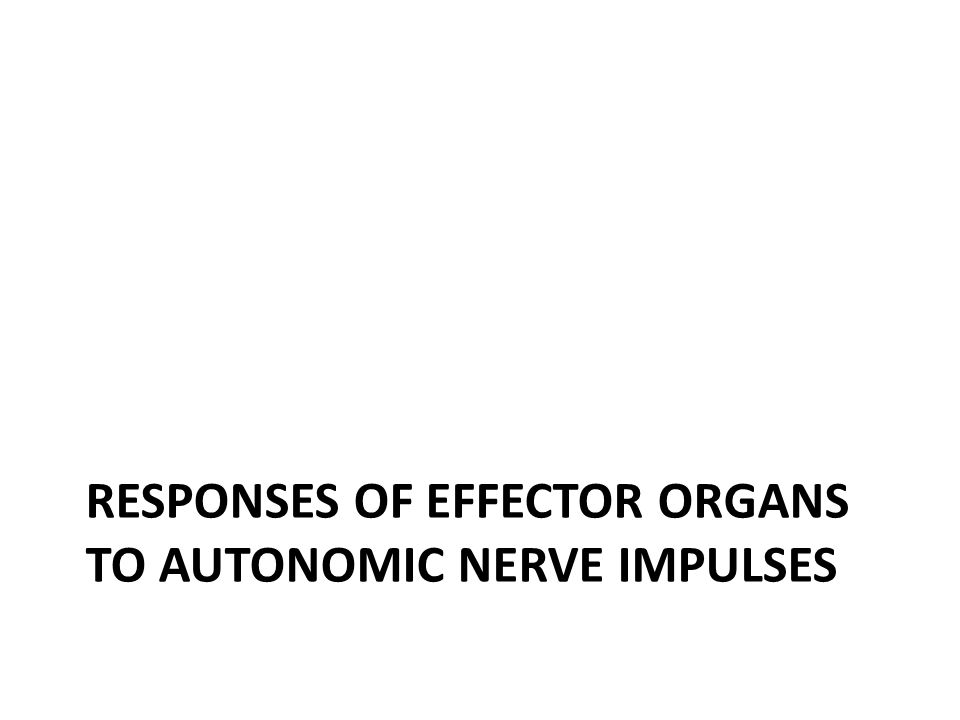 RESPONSES OF EFFECTOR ORGANS TO AUTONOMIC NERVE IMPULSES
