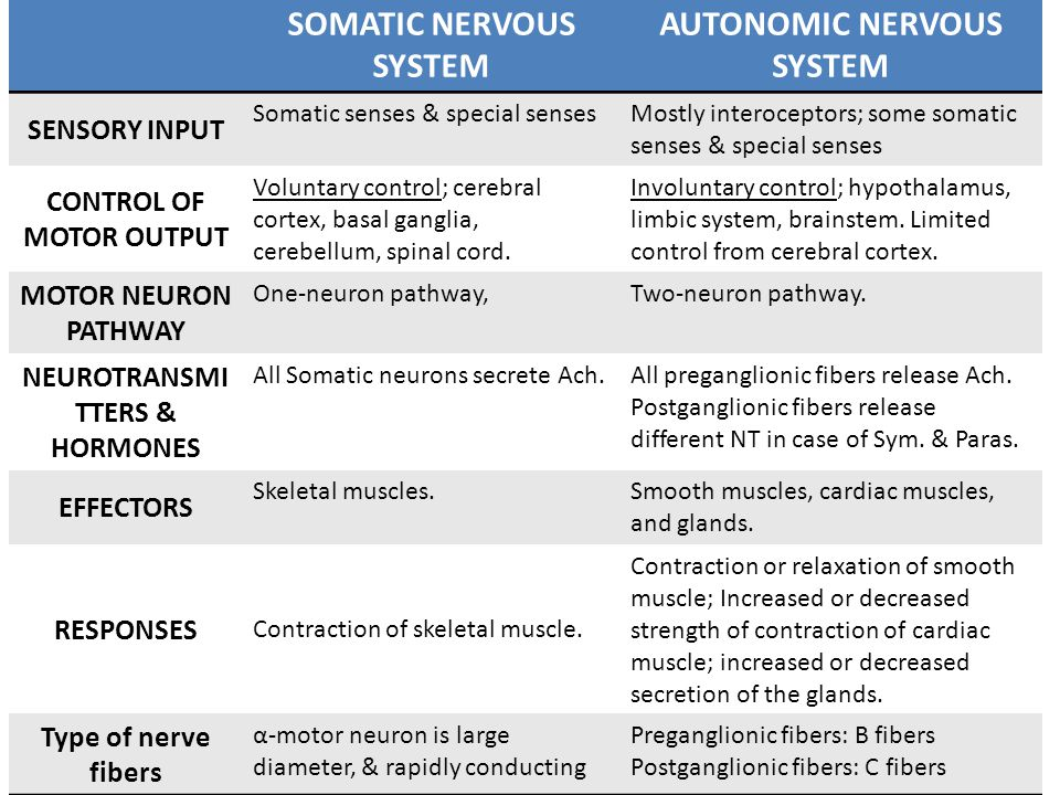 SOMATIC NERVOUS SYSTEM AUTONOMIC NERVOUS SYSTEM SENSORY INPUT Somatic senses & special sensesMostly interoceptors; some somatic senses & special senses CONTROL OF MOTOR OUTPUT Voluntary control; cerebral cortex, basal ganglia, cerebellum, spinal cord.