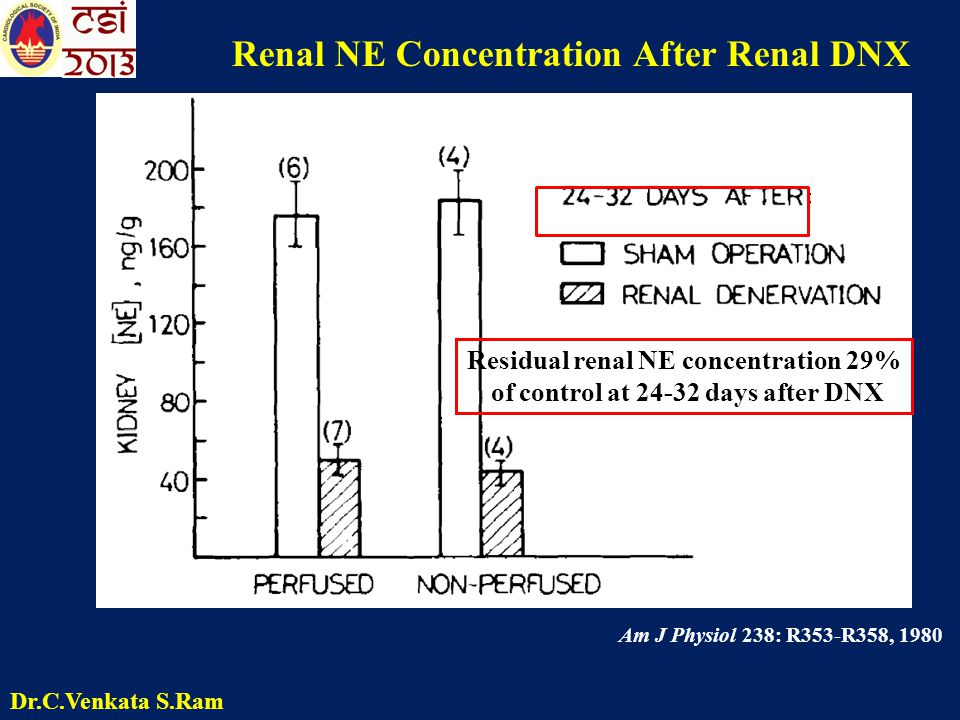 Am J Physiol 238: R353-R358, 1980 Renal NE Concentration After Renal DNX Residual renal NE concentration 29% of control at 24-32 days after DNX Dr.C.V