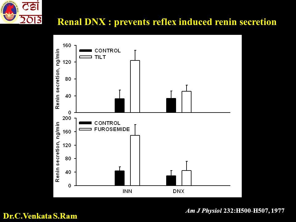 Renal DNX : prevents reflex induced renin secretion Am J Physiol 232:H500-H507, 1977 Dr.C.Venkata S.Ram