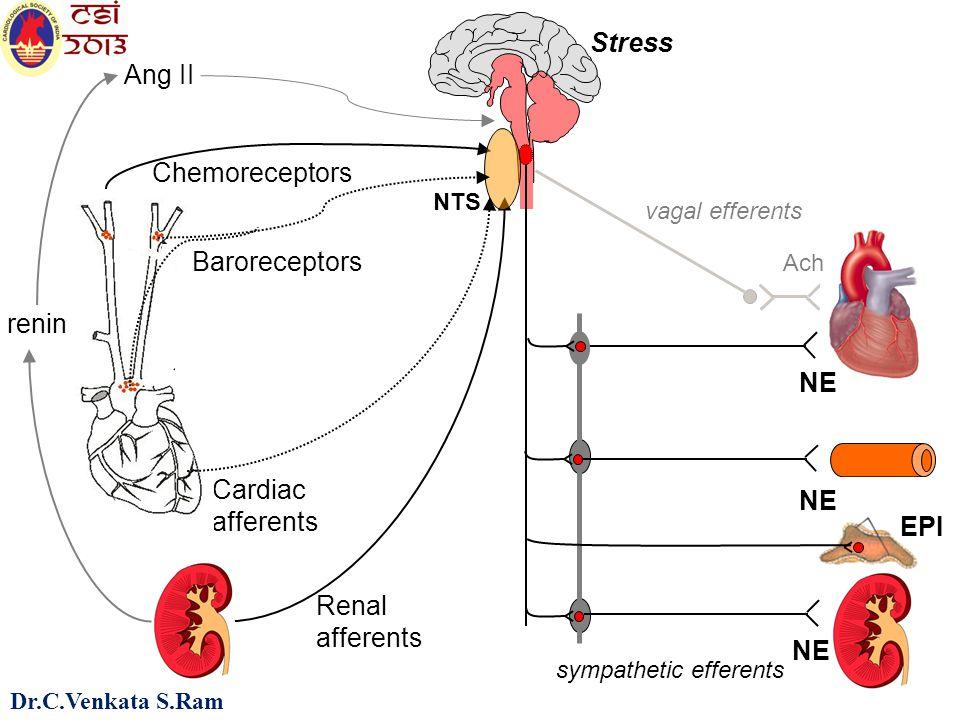 6 vagal efferents sympathetic efferents NE Ach EPI Stress Renal afferents Chemoreceptors Cardiac afferents NTS Baroreceptors Ang II renin NE Dr.C.Venkata S.Ram