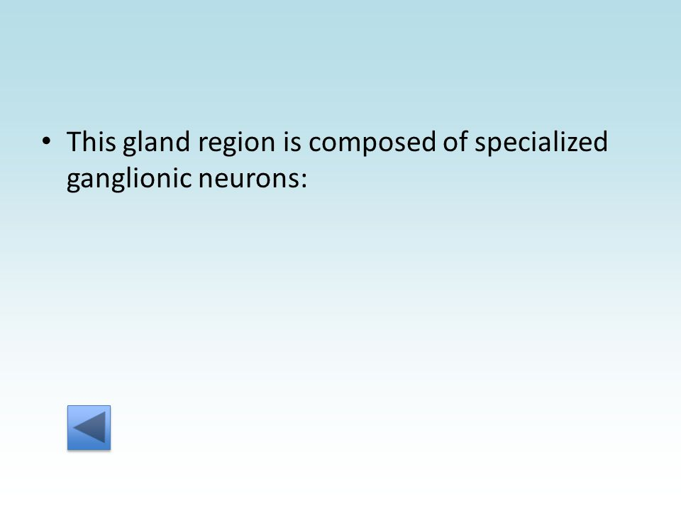This gland region is composed of specialized ganglionic neurons: