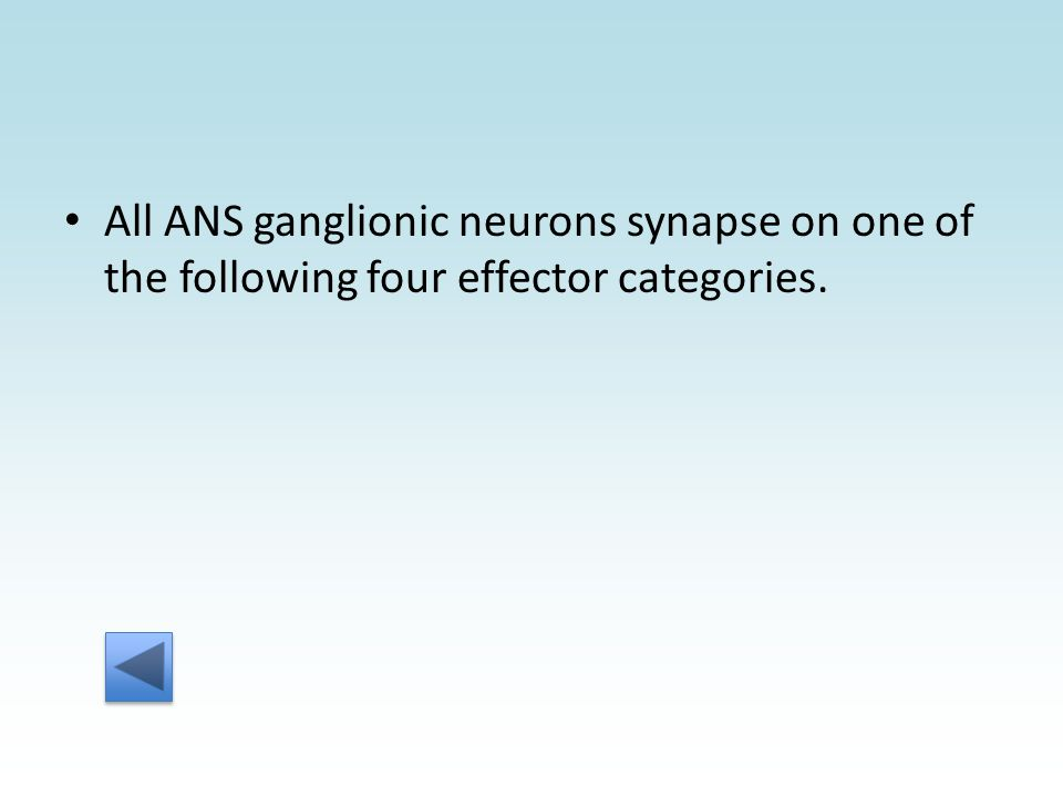 All ANS ganglionic neurons synapse on one of the following four effector categories.