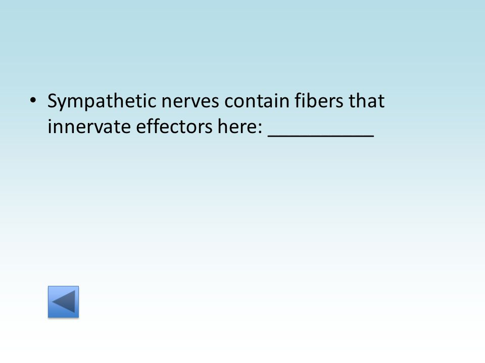 Sympathetic nerves contain fibers that innervate effectors here: __________
