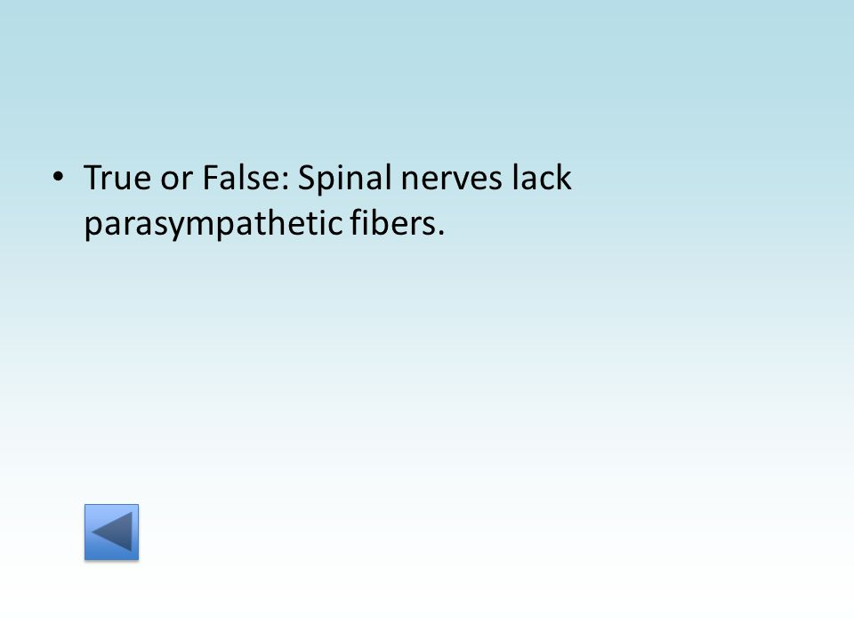 True or False: Spinal nerves lack parasympathetic fibers.