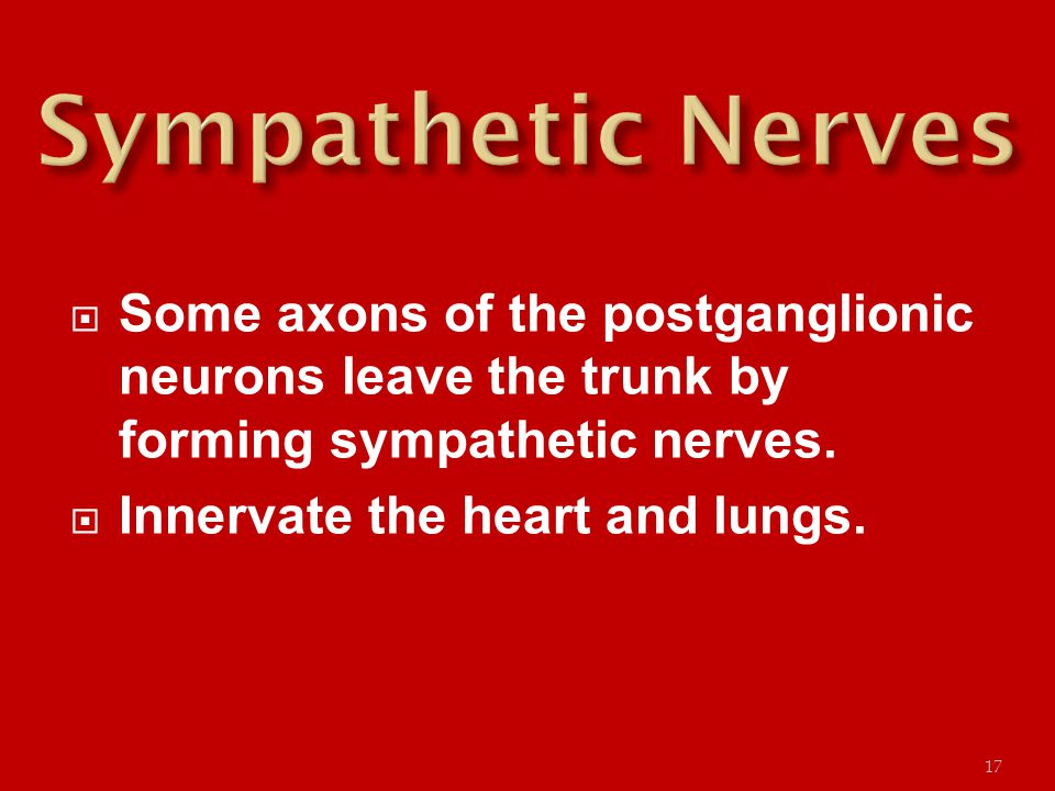  Some axons of the postganglionic neurons leave the trunk by forming sympathetic nerves.