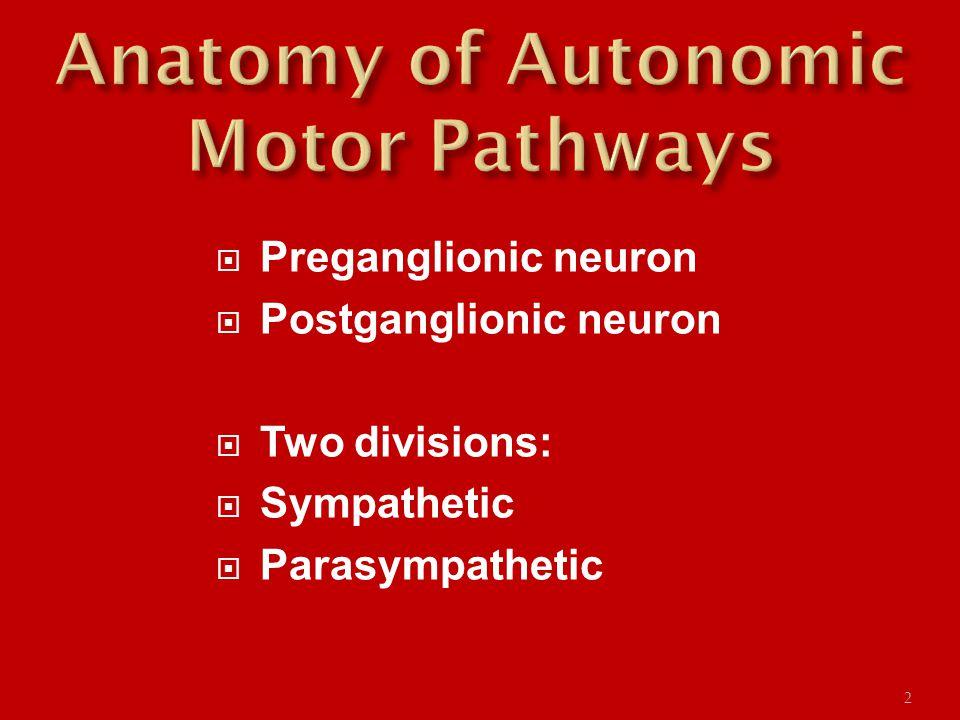  Preganglionic neuron  Postganglionic neuron  Two divisions:  Sympathetic  Parasympathetic 2