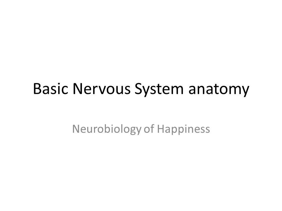 Basic Nervous System anatomy Neurobiology of Happiness