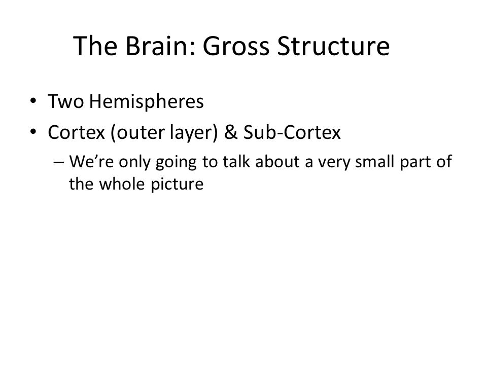 The Brain: Gross Structure Two Hemispheres Cortex (outer layer) & Sub-Cortex – We're only going to talk about a very small part of the whole picture