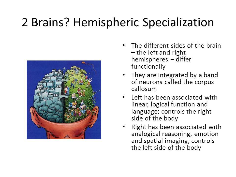 2 Brains.