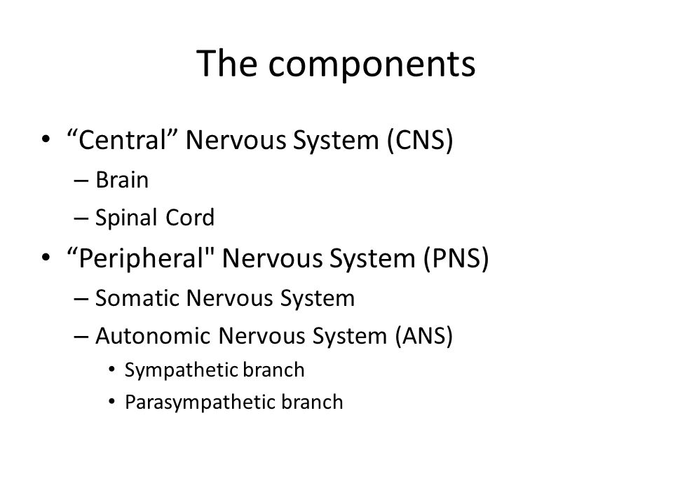 The components Central Nervous System (CNS) – Brain – Spinal Cord Peripheral Nervous System (PNS) – Somatic Nervous System – Autonomic Nervous System (ANS) Sympathetic branch Parasympathetic branch