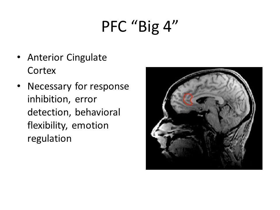PFC Big 4 Anterior Cingulate Cortex Necessary for response inhibition, error detection, behavioral flexibility, emotion regulation