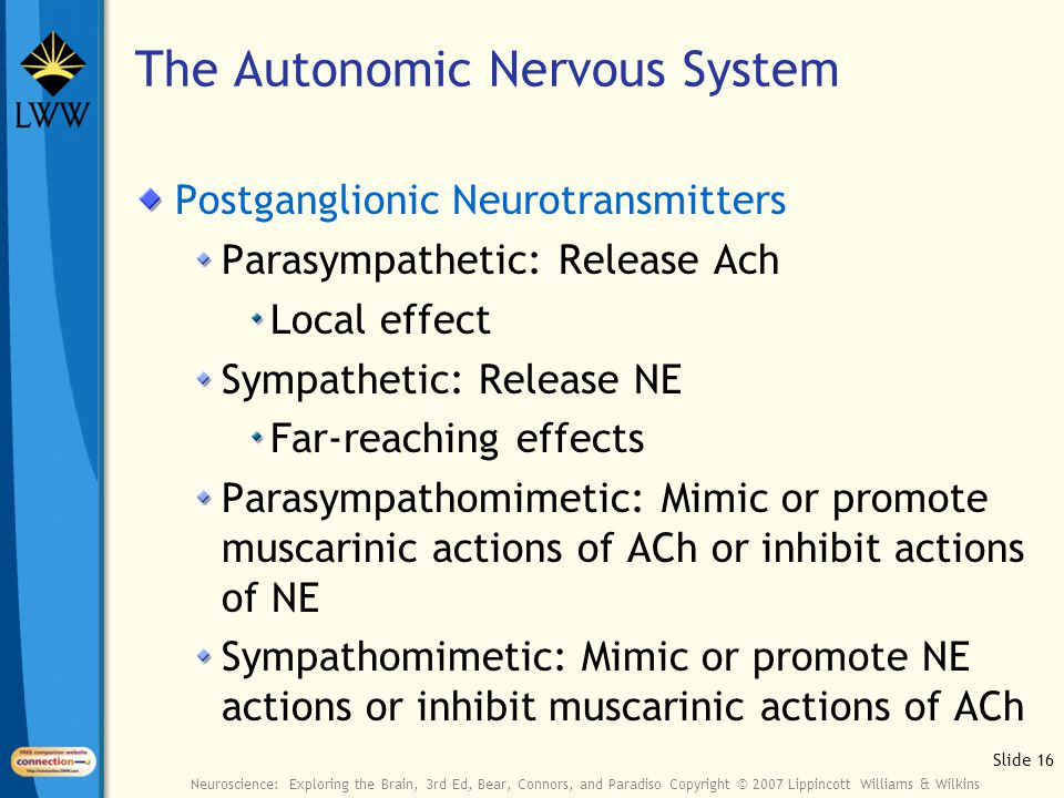 Slide 16 Neuroscience: Exploring the Brain, 3rd Ed, Bear, Connors, and Paradiso Copyright © 2007 Lippincott Williams & Wilkins Postganglionic Neurotransmitters Parasympathetic: Release Ach Local effect Sympathetic: Release NE Far-reaching effects Parasympathomimetic: Mimic or promote muscarinic actions of ACh or inhibit actions of NE Sympathomimetic: Mimic or promote NE actions or inhibit muscarinic actions of ACh The Autonomic Nervous System