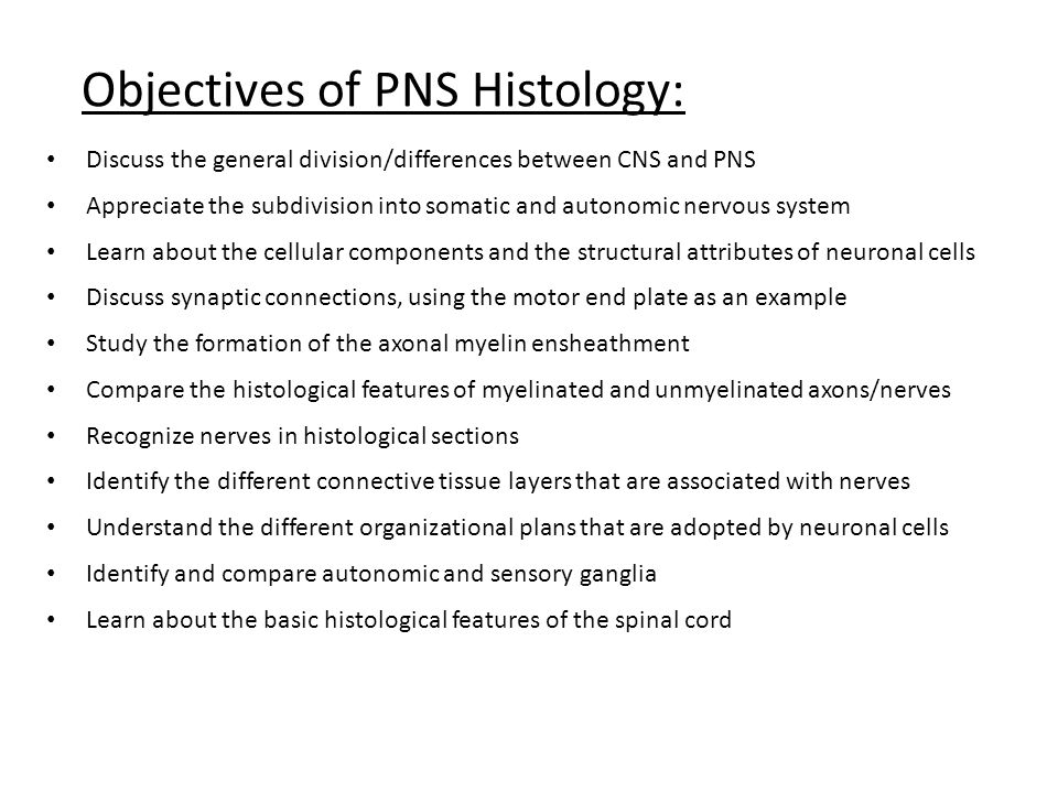 Objectives of PNS Histology: Discuss the general division/differences between CNS and PNS Appreciate the subdivision into somatic and autonomic nervous system Learn about the cellular components and the structural attributes of neuronal cells Discuss synaptic connections, using the motor end plate as an example Study the formation of the axonal myelin ensheathment Compare the histological features of myelinated and unmyelinated axons/nerves Recognize nerves in histological sections Identify the different connective tissue layers that are associated with nerves Understand the different organizational plans that are adopted by neuronal cells Identify and compare autonomic and sensory ganglia Learn about the basic histological features of the spinal cord