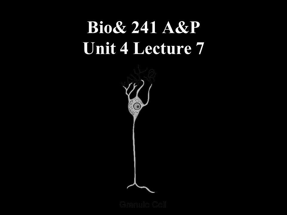 Bio& 241 A&P Unit 4 Lecture 7