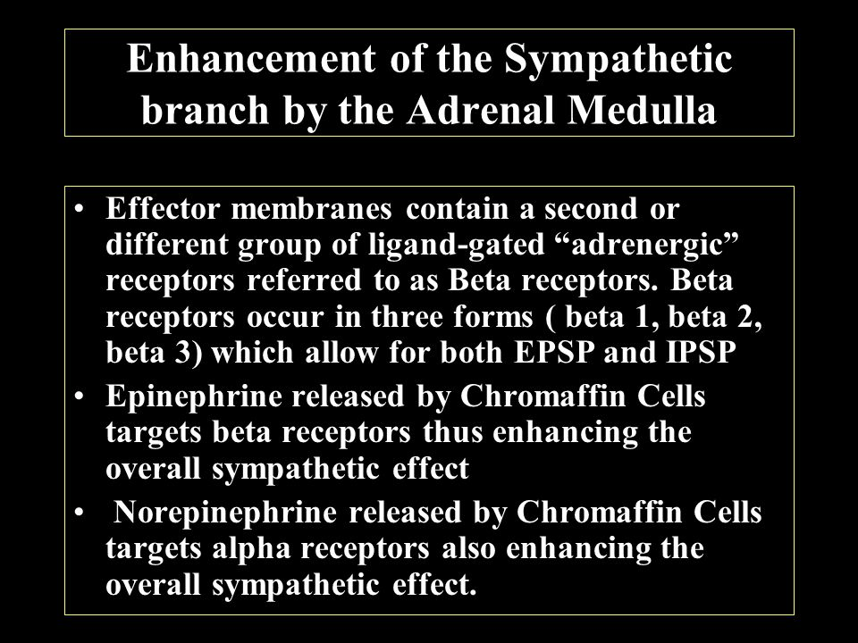 Enhancement of the Sympathetic branch by the Adrenal Medulla Effector membranes contain a second or different group of ligand-gated adrenergic receptors referred to as Beta receptors.