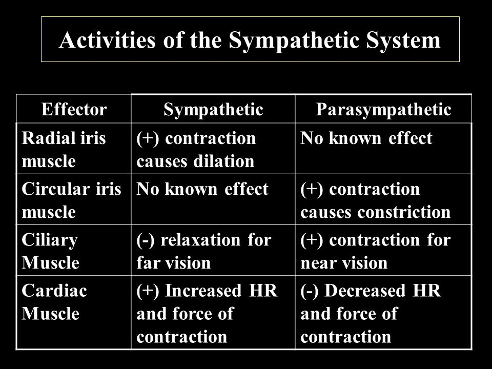 Activities of the Sympathetic System EffectorSympatheticParasympathetic Radial iris muscle (+) contraction causes dilation No known effect Circular iris muscle No known effect(+) contraction causes constriction Ciliary Muscle (-) relaxation for far vision (+) contraction for near vision Cardiac Muscle (+) Increased HR and force of contraction (-) Decreased HR and force of contraction