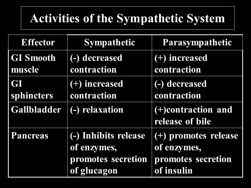 Activities of the Sympathetic System EffectorSympatheticParasympathetic GI Smooth muscle (-) decreased contraction (+) increased contraction GI sphincters (+) increased contraction (-) decreased contraction Gallbladder(-) relaxation(+)contraction and release of bile Pancreas(-) Inhibits release of enzymes, promotes secretion of glucagon (+) promotes release of enzymes, promotes secretion of insulin
