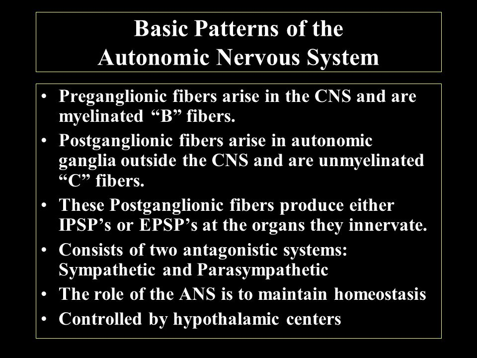 Comparison of the Somatic and Autonomic Nervous Systems
