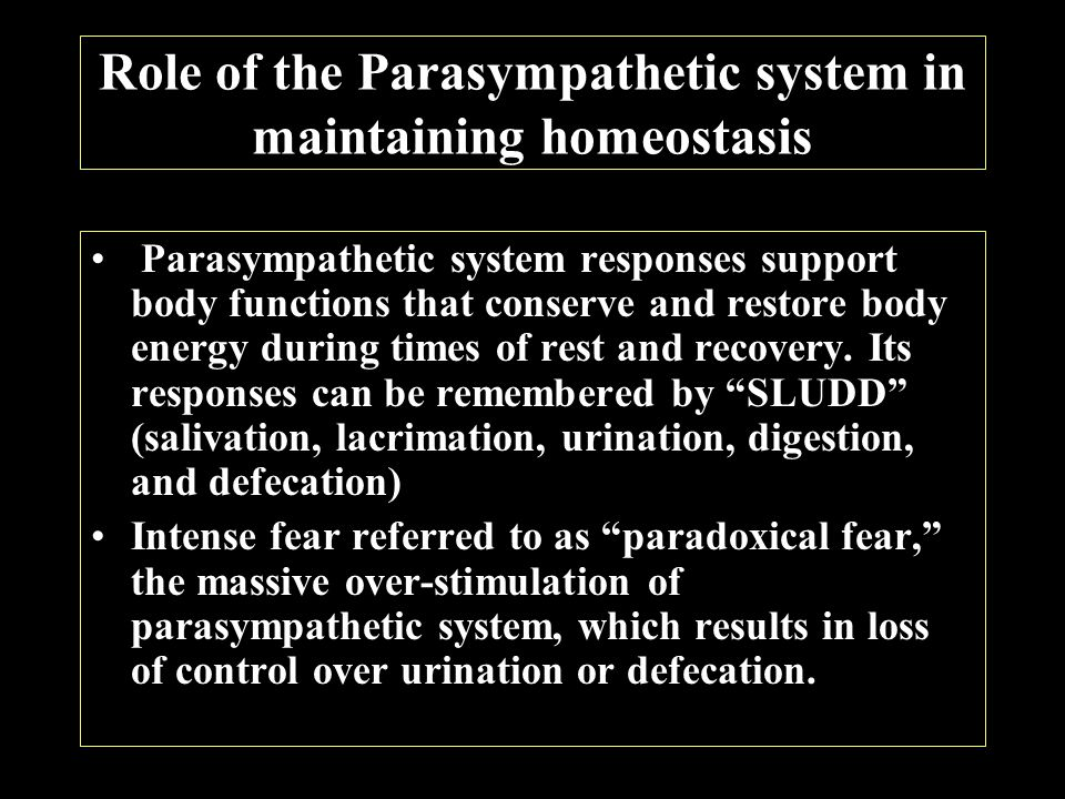 Role of the Parasympathetic system in maintaining homeostasis Parasympathetic system responses support body functions that conserve and restore body energy during times of rest and recovery.