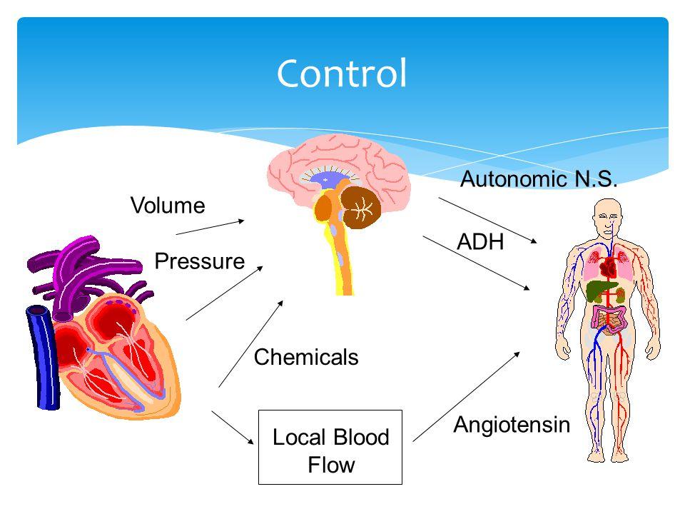 Control Volume Pressure Chemicals Autonomic N.S. ADH Local Blood Flow Angiotensin