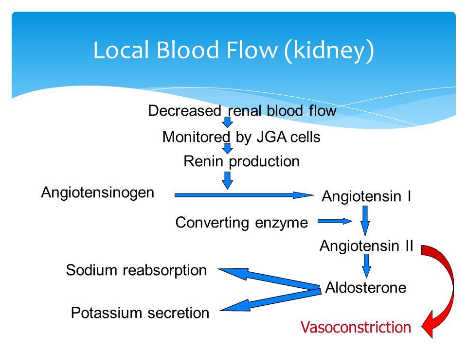  Angiotensin II is a vasoconstrictor  Aldosterone increases vascular sensitivity to Angiotensin II  ADH (anti-diuretic hormone) increases water reabsorption  ANF decreases sodium reabsorption Hormones