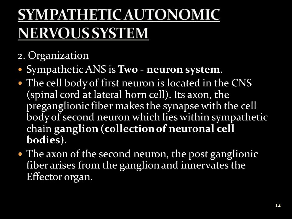 2.Organization Sympathetic ANS is Two - neuron system.