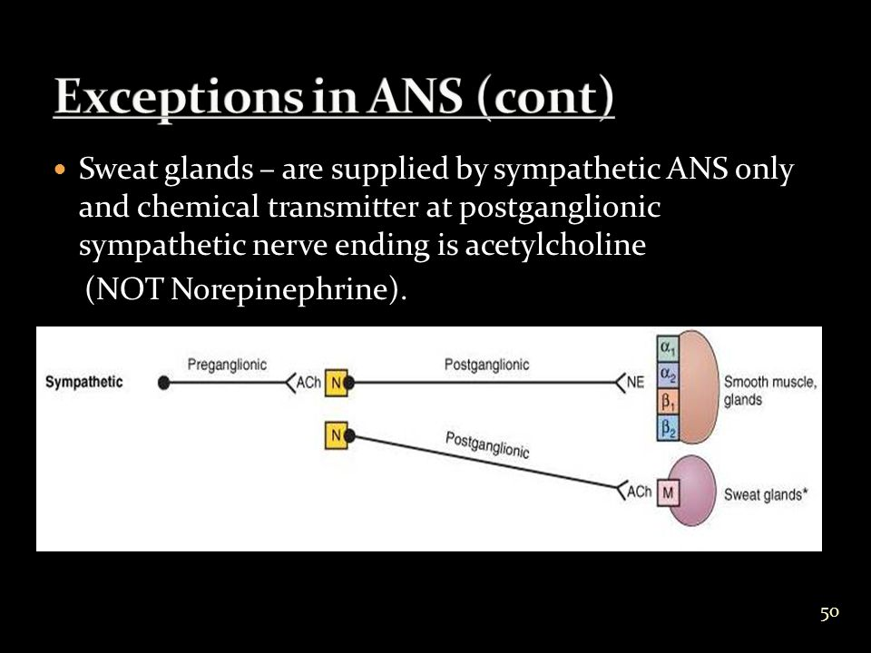 Sweat glands – are supplied by sympathetic ANS only and chemical transmitter at postganglionic sympathetic nerve ending is acetylcholine (NOT Norepinephrine).