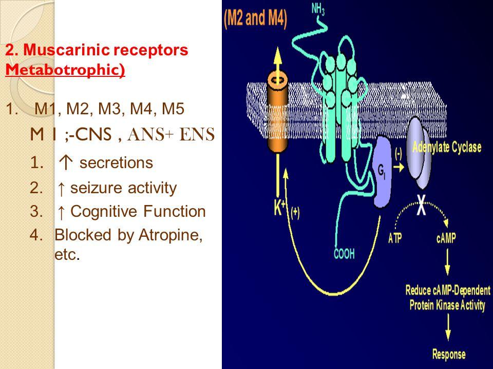 2. Muscarinic receptors Metabotrophic) 1.