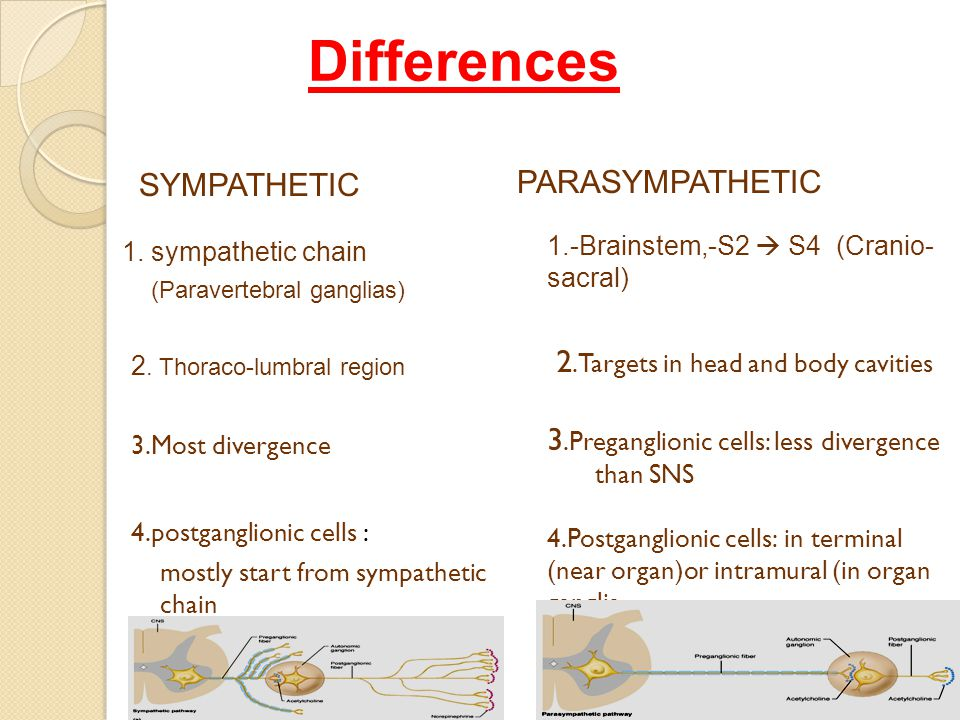Differences SYMPATHETIC PARASYMPATHETIC 1.-Brainstem,-S2  S4 (Cranio- sacral) 2.Targets in head and body cavities 3.Preganglionic cells: less divergence than SNS 4.Postganglionic cells: in terminal (near organ)or intramural (in organ ganglia 1.