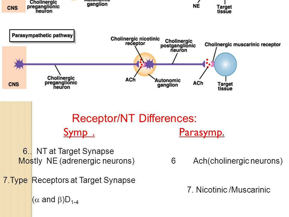 Receptor/NT Differences: Symp. Parasymp. 6..