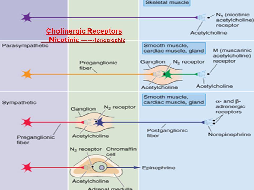 Cholinergic Receptors Nicotinic ------ Ionotrophic