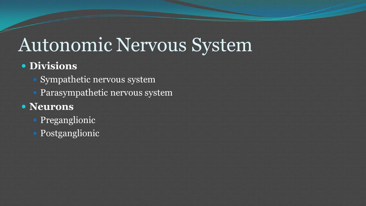 Autonomic Nervous System Divisions Sympathetic nervous system Parasympathetic nervous system Neurons Preganglionic Postganglionic