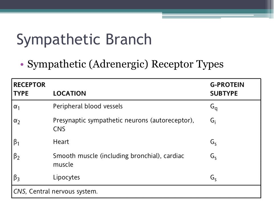 Sympathetic Branch Sympathetic (Adrenergic) Receptor Types