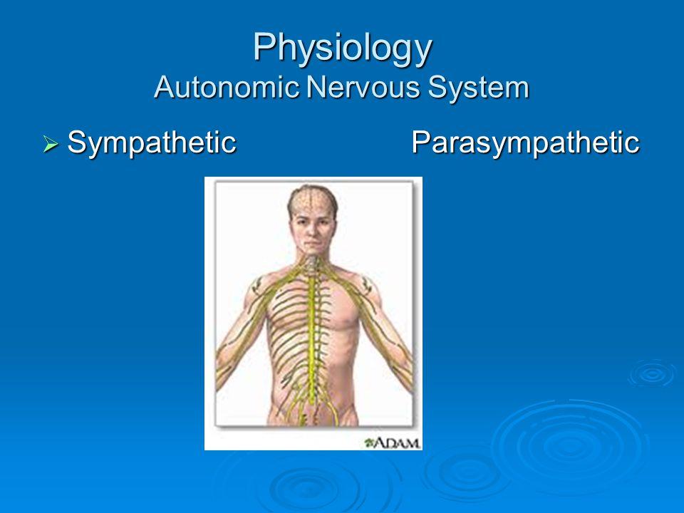 Physiology Autonomic Nervous System  Sympathetic Parasympathetic