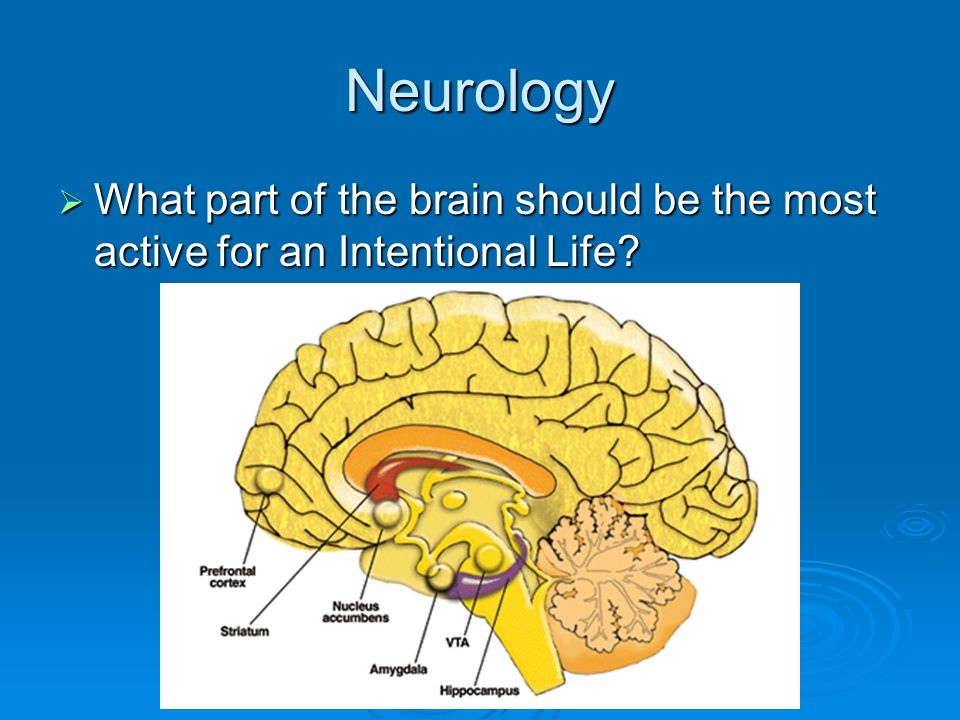 Neurology  What part of the brain should be the most active for an Intentional Life