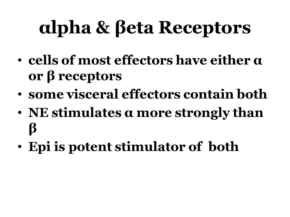 αlpha & βeta Receptors cells of most effectors have either α or β receptors some visceral effectors contain both NE stimulates α more strongly than β Epi is potent stimulator of both