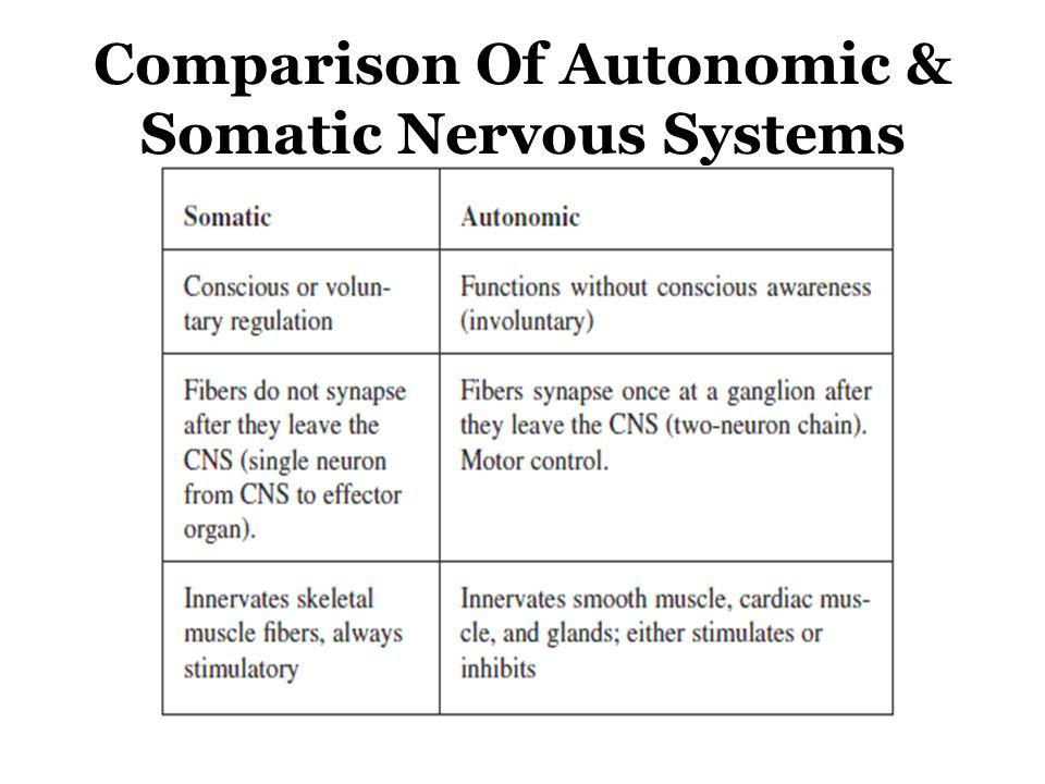 Comparison Of Autonomic & Somatic Nervous Systems