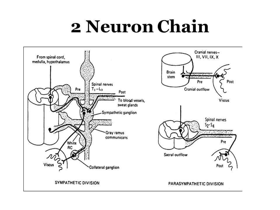 2 Neuron Chain