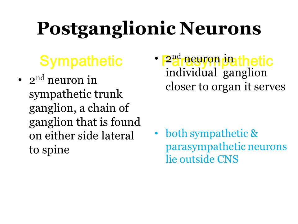 Postganglionic Neurons SympatheticParasympathetic 2 nd neuron in sympathetic trunk ganglion, a chain of ganglion that is found on either side lateral