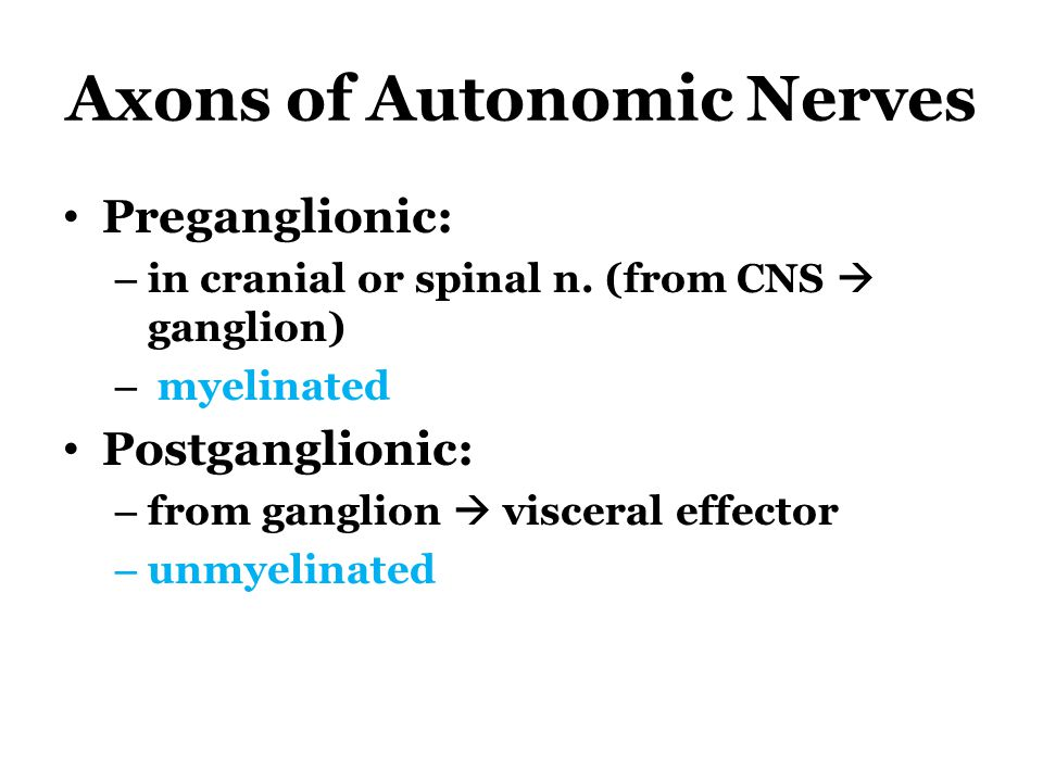 Axons of Autonomic Nerves Preganglionic: – in cranial or spinal n. (from CNS  ganglion) – myelinated Postganglionic: – from ganglion  visceral effec